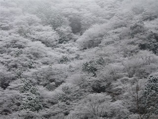 20081227-3.jpg