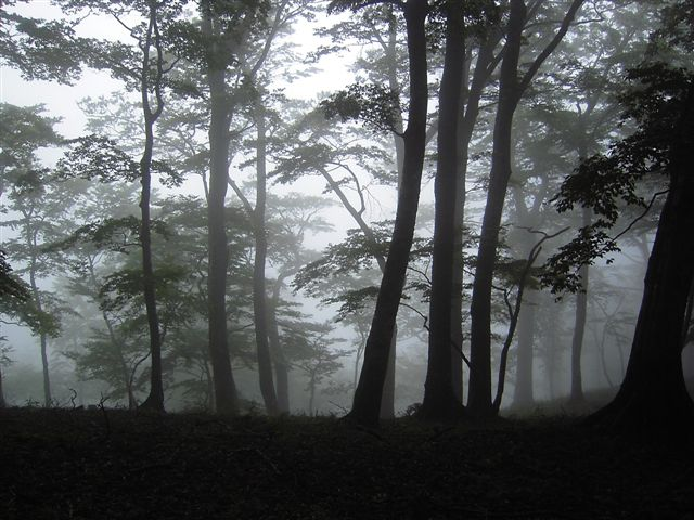 20090909-2.jpg
