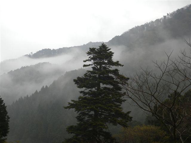 20100427-1.jpg