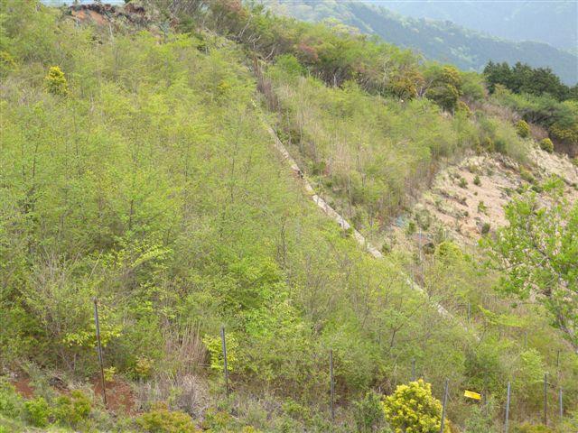20100523-3.jpg